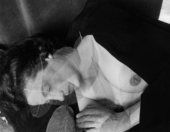 imogen-cunningham-the-taiwan-leaves-1963